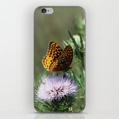Aphrodite Fritillary  iPhone & iPod Skin