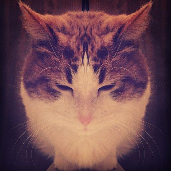 Symmetrical Feline Art Print