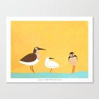 scolopacidae birds Canvas Print