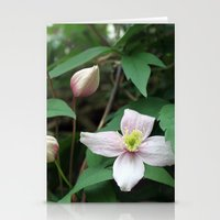 summer pink flower on vine. backyard floral photography. Stationery Cards