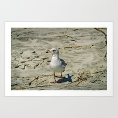 Ignored by a Seagull Art Print