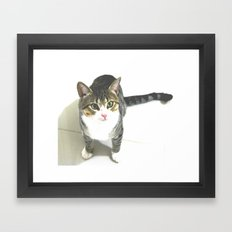 Miojo Cat. Framed Art Print