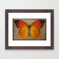 Papillon  Framed Art Print