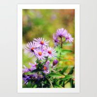 Purple Aster Art Print