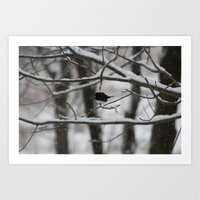 Junco Art Print