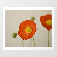 Poppy Flower Red Orange … Art Print