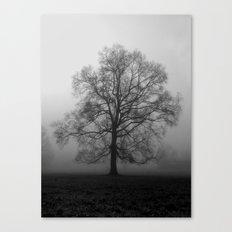 Misty Pasture Oak Canvas Print