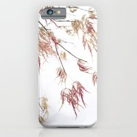 iPhone & iPod Case featuring japanese maple by rachel kelso