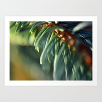 Needles of the Blue Spruce Art Print