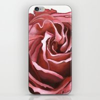 Pink Rose iPhone & iPod Skin