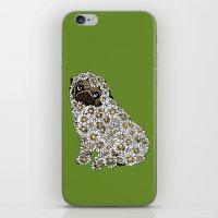 Pug Daisy iPhone & iPod Skin