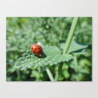 Ladybug on a Leaf Canvas Print
