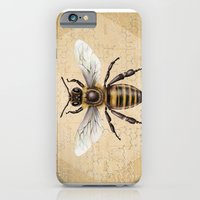 bee iPhone & iPod Cases featuring Bee by Paper Skull Studios