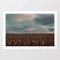 In The Corn Art Print