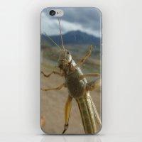 Gardner Grasshopper iPhone & iPod Skin