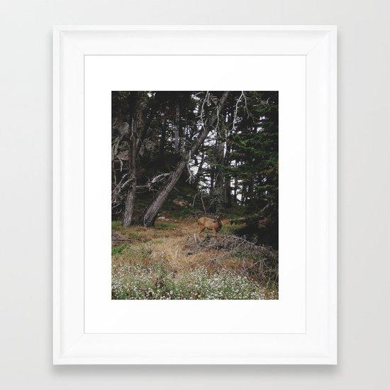 Lobos Deer Framed Art Print