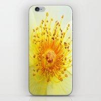 Rose Heart iPhone & iPod Skin