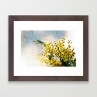 Mimosa Framed Art Print