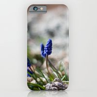 iPhone & iPod Case featuring Grape Hyacinth by Katie Kirkland Photography