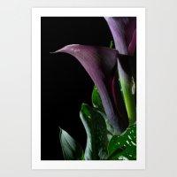 The Calla Purple 4 Art Print