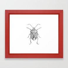 Pentatomidae Framed Art Print