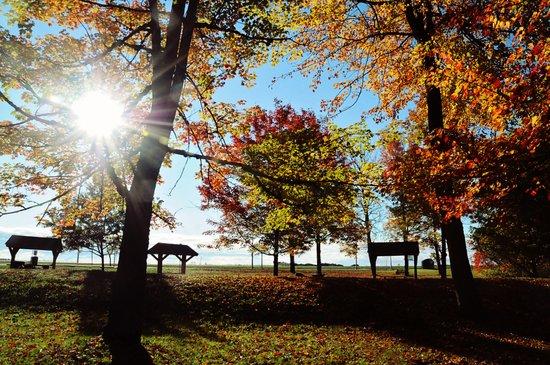 Autumnal sunshine Canvas Print