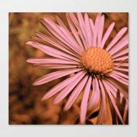 Pink as a Petal Canvas Print