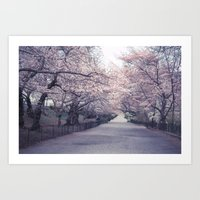 Central Park Cherry Blossom Path - New York City Art Print