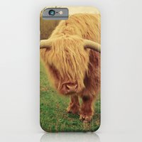 iPhone Cases featuring Scottish Highland Steer - regular version by Olivia Joy StClaire