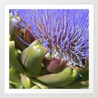 Artichoke Bloom Macro II Art Print