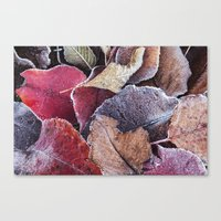 Frosty Ground Cover Canvas Print