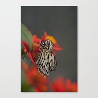 Wings Of Nature Canvas Print