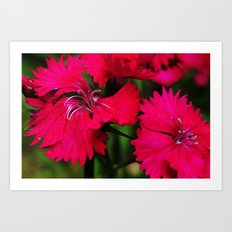 Rhododendrons Art Print