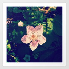 Blackberry Flower Art Print