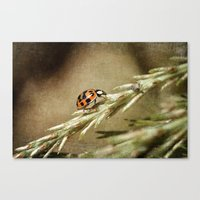 Dinner Date.... with an Aphid Canvas Print