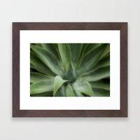 Dreamy Aloe Framed Art Print