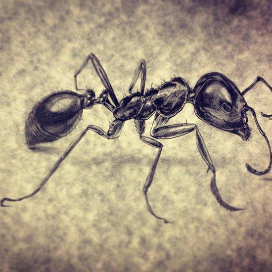 Macro Ant Art Print