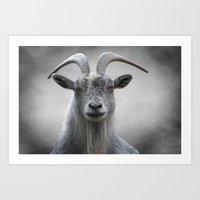 The Old Goat Art Print