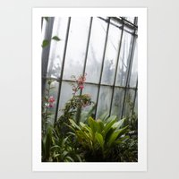 Edinburgh Flowers Art Print