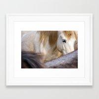 Camargue Horse portrait 6827 Framed Art Print
