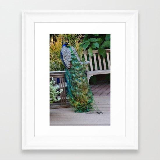 Proud Peacock Framed Art Print
