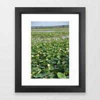 Amana Lilly Pond Framed Art Print