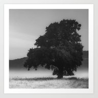 Tree And Fog - Black And… Art Print