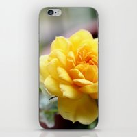 Satin iPhone & iPod Skin