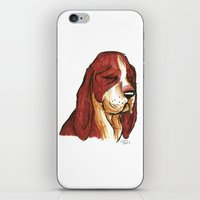 Brush Breeds-Basset Hound iPhone & iPod Skin