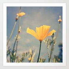 orange poppies! Art Print