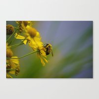 Bumbling Around Canvas Print