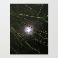 Autumn Moon Peeks Through The Branches Canvas Print