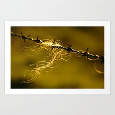 Caught on the Wire Art Print