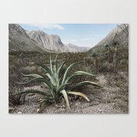 Mexico Century  Canvas Print